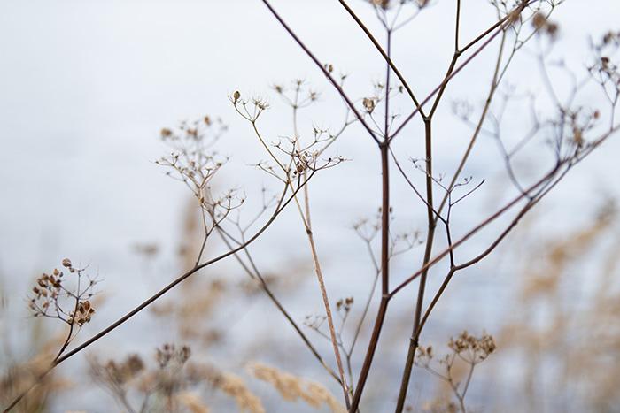©Aurélie Marcellak | La finesse de l'hiver