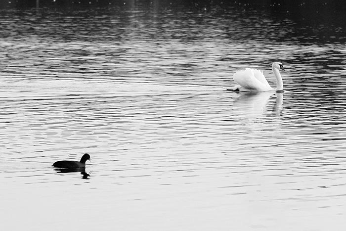 ©Aurélie Marcellak | Des oiseaux au parc du Héron