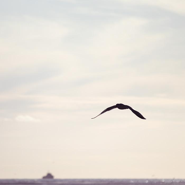 ©Aurélie Marcellak | Le goeland et la mer