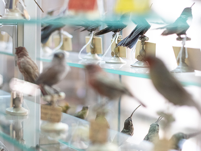 ©Aurélie Marcellak | Musée d'histoire naturelle de Lille