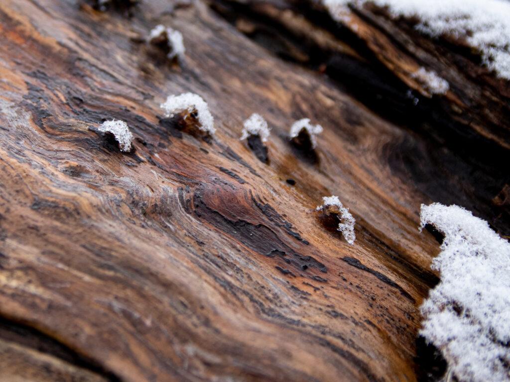 ©Aurélie Marcellak | Voile blanc sur couleurs d'hiver #3