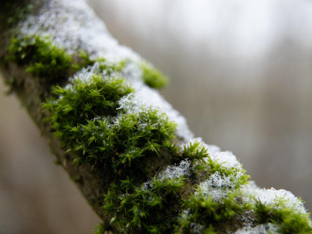 ©Aurélie Marcellak | Voile blanc sur couleurs d'hiver #1