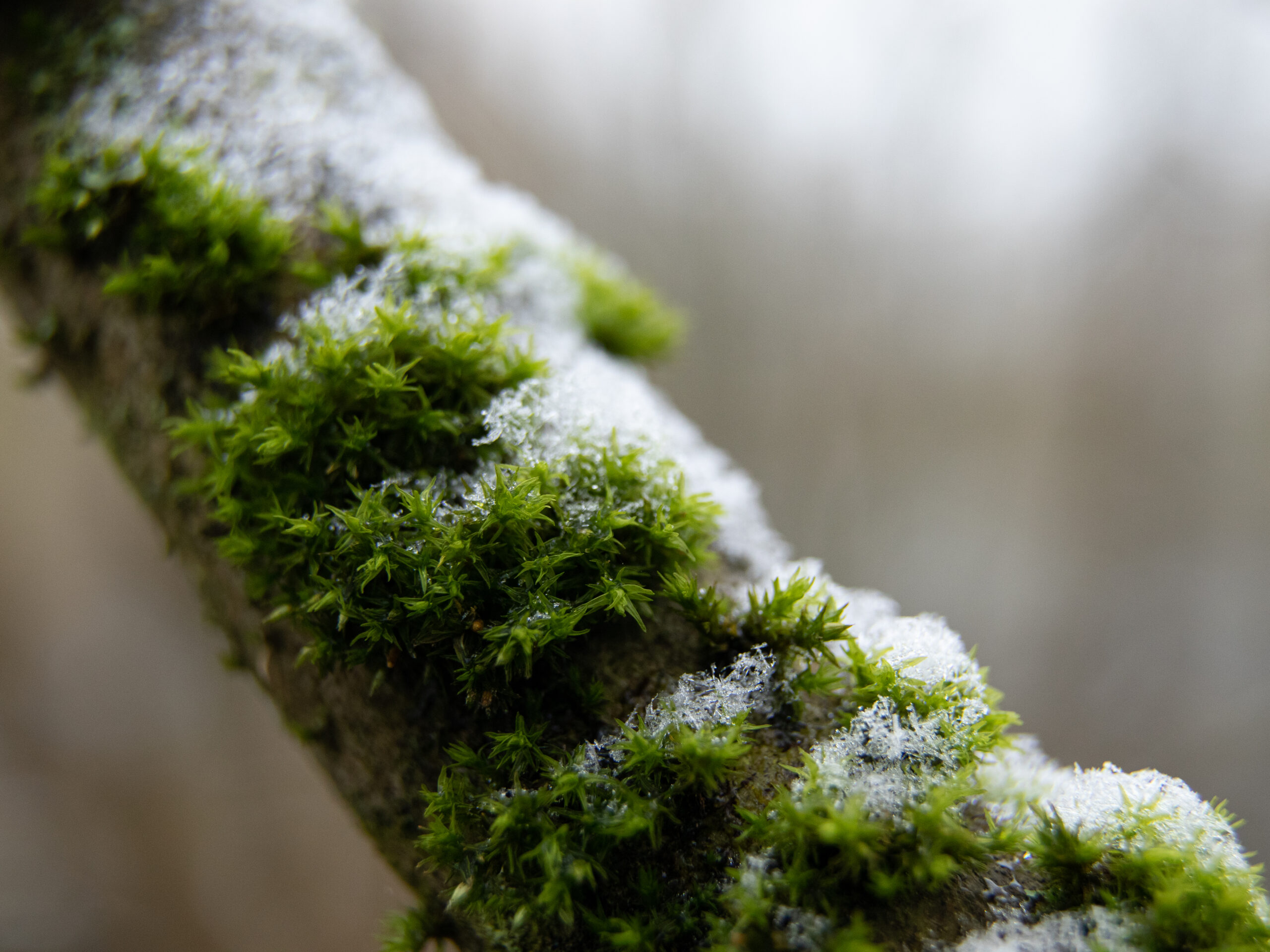 Voile blanc sur couleurs d'hiver - Aurélie Marcellak