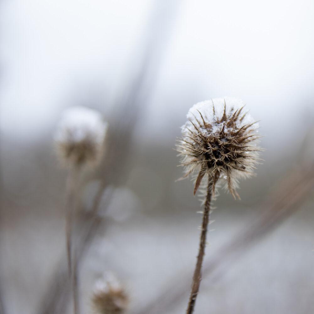 ©Aurélie Marcellak | Voile blanc sur couleurs d'hiver #5
